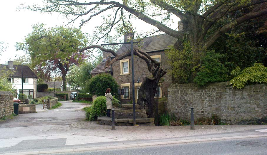 The Druid's or Caton Oak