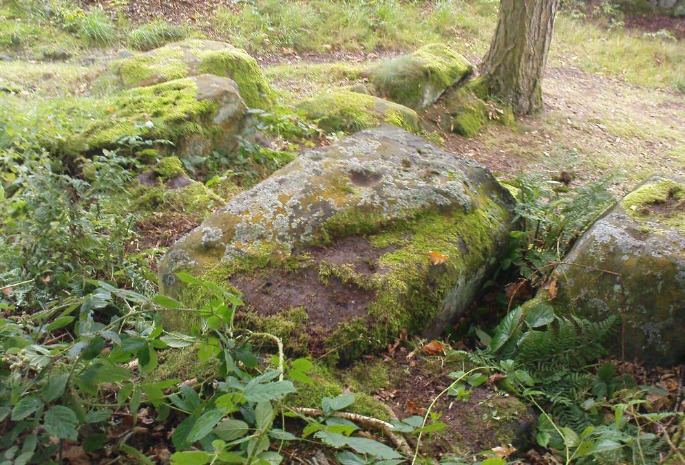 Panorama Woods stone 230