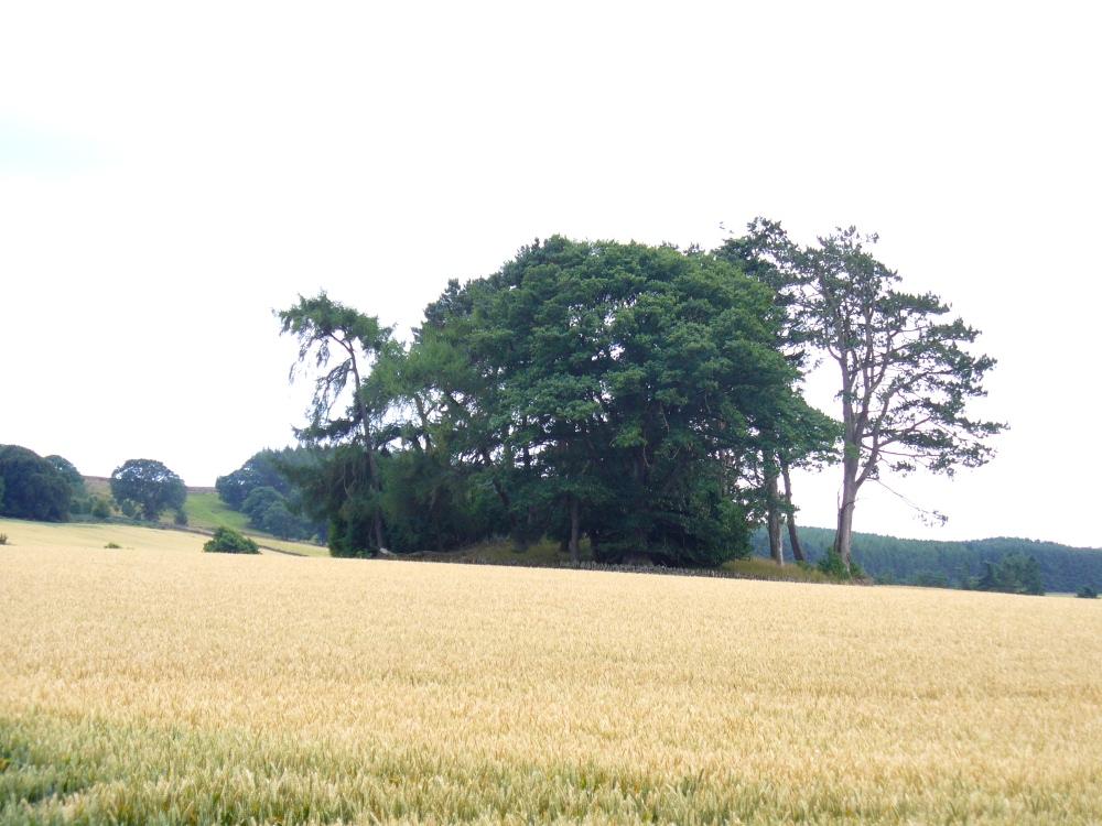 The giant Kinpurnie cairn