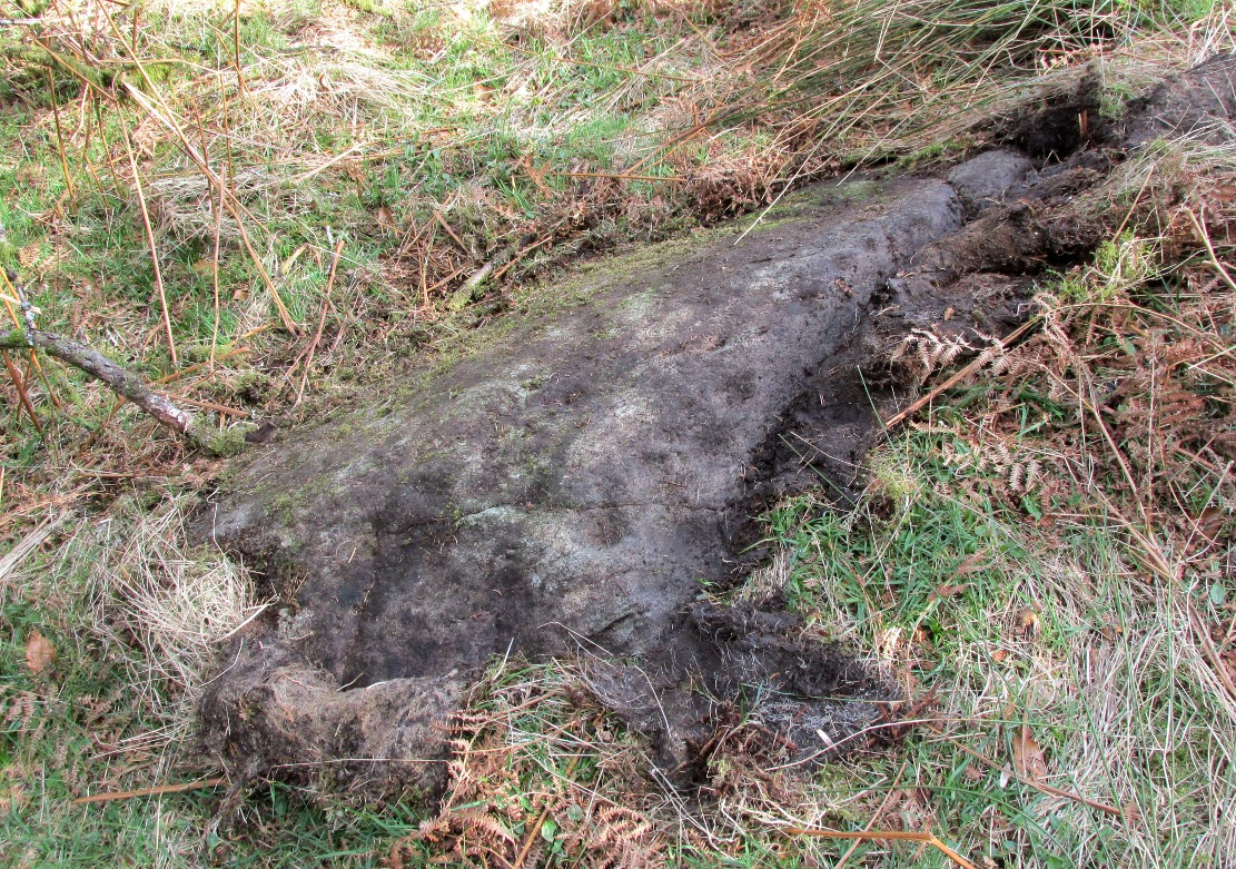 Druidsfield Cup-Marked Stone