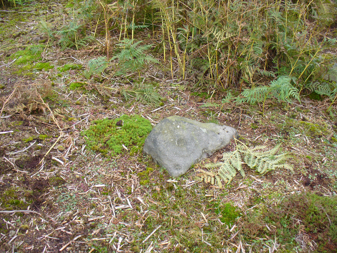 Cup-and-ring stone in situ